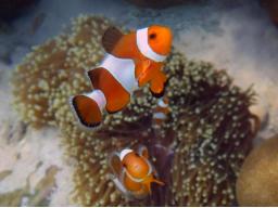 Webinar: Weisheiten der Meeresbewohner mit Energieübertragung