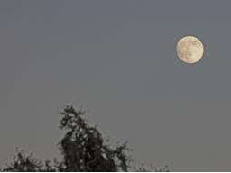 Webinar: Mondphasen und Homosexualität im Horoskop