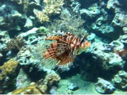 Webinar: Anleitung/Meditation zur Erhaltung von Meeresbewohnerbotschaften