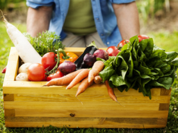 Webinar: Kinesiologie als Selbsthilfeinstument?! - Themenfokus: Ernährung Teil II
