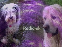 Webinar: Radionische Analyse und einen Monat Besendung für Dein Tier