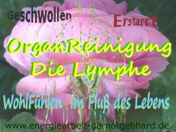 Webinar: OrganReinigung-Die Lymphe
