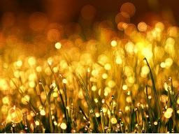 Webinar: Gold Reiki - Verfeinerung der Kundalinienergie