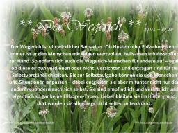 Webinar: Kräuterkurs 2. Lektion