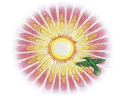 Webinar: Erwecke deine SchöpferInnen-Kraft