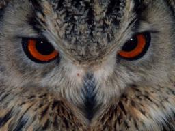 Webinar: Die Nachteule als Seelenverwandte