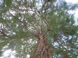 Webinar: Die Weisheit der Bäume