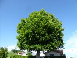 Webinar: Die Bäume sind mit uns und geben uns Kraft