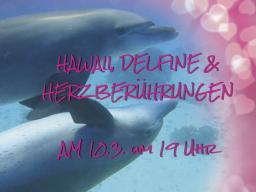 Webinar: Hawaii, Delfine und Herzberührungen