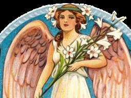 Webinar: Liebevolle Botschaft vom Engelkollektiv - Lichtcode für 3 Monate