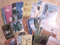 Webinar: Krafttier Karten