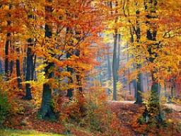 Webinar: GoodMorningStarter - aktive Meditation für einen gelungenen Wochenstart