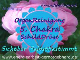 Webinar: OrganReinigung 5. Chakra/ SchildDrüse