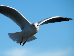 Webinar: Lass dir Flügel wachsen!