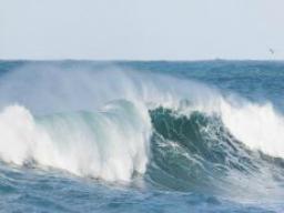 Webinar: Die Matrix-Welle bewegt - Ich liebe, achte und wertschätze mich!