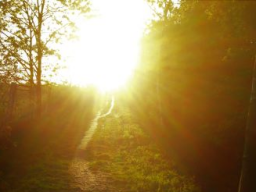 Webinar: Chela´s Baum Guten Morgen Orakel