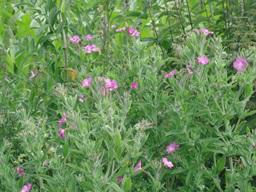 Webinar: SABINE RICHTER zu Pflanzen - Informationen auf der stofflichen und feinstofflichen Ebene - Teil 3