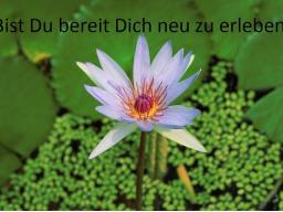 Webinar: Meditation - Dein ganz persönlicher Rückzugsort
