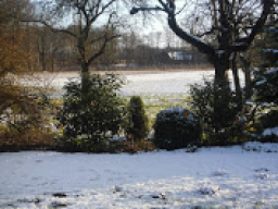 Webinar: Magischer Garten