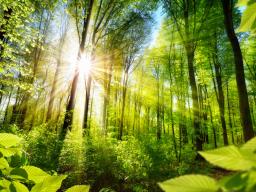 """Webinar: Live-Meditation """"Wir fühlen die Essenz der Natur"""""""