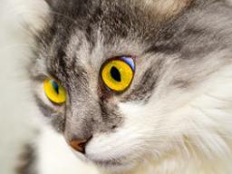 Webinar: Habt ihr Katzen als Haustiere?