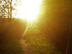 Webinar: Chela´s Engel Guten Morgen 0rakel