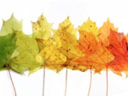 Webinar: Veränderungen meistern - Entspannung statt Stress
