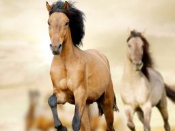 Webinar: Fantasiereise Krafttier Pferd
