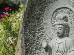 Webinar: Meditation und Achtsamkeitstraining, das 12 Wochen Onlinetraining