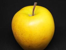 Webinar: Spagyrisches Märchenfrühstück: Der Eisenhans 4: Die Früchte ernten