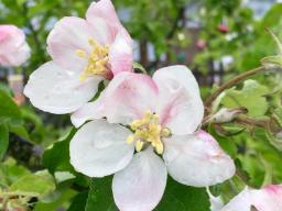 Webinar: die Bedrückung ablegen ~ die Frühlingskraft erwecken
