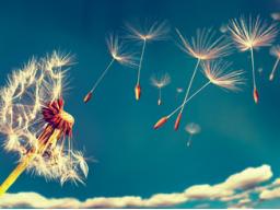 Webinar: SPEZIALAKTION-21 Tage Intensiv Transformation - Erkenne Deine Brillanz!!!