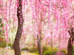 Webinar: Seelenreise zu Deinem inneren Frieden (1-3Std. WELLNESSZEIT)