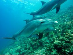 Webinar: Delphin Frequenz Energie-Eine Energie der Neuzeit *persönliche Ferneinweihung*