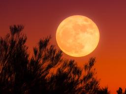 Webinar: Heilung mit der Kraft der Mondin