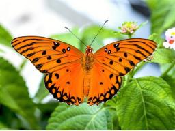 Webinar: Raupe oder Schmetterling? Bereit für deine Geburt?  BASICS