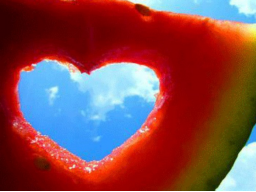 Webinar: Liebe 5: Von Echsen und Sexen