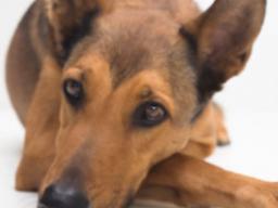 Webinar: ♥♥Rescue Reiki für Hunde♥ Einstimmung ♥