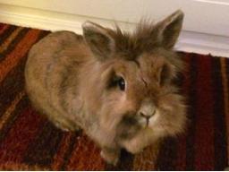 Webinar: Einzelberatung: Individuelle Tierkommunikation mit Deinem Tier