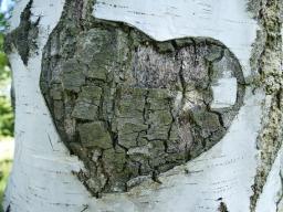 Webinar: Field of Love Meditation