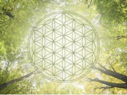 Webinar: Einzelsitzung Beratung und Hilfestellungen mit Hilfe der geistigen Welt
