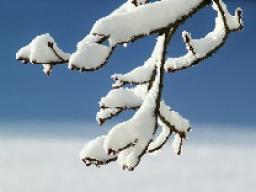 Webinar: Dein Monat Jänner