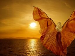 Webinar: Lebe DEIN Glück und Harmonie in deinem   Leben