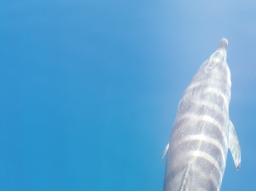 Webinar: Botschaften der Delfine
