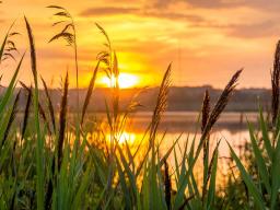 Webinar: Vom Neubeginn in die Lebensfreude - Das Sonnenjahr 2017
