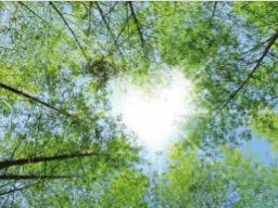 Webinar: Dein Herz-dein Begleiter und Wegweiser