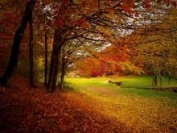 Webinar: Dein Monat Oktober 2016