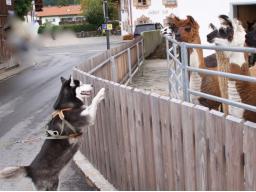 Webinar: Grüner Star beim Hund