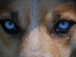 Webinar: Welchen Wolf fütterst du im Augenblick?