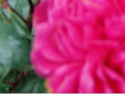 Webinar: voller Freude auf 2015; die Rauhnächte